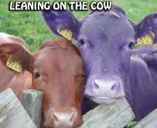 """Why I believe in """"The Purple Cow"""": Part 2"""