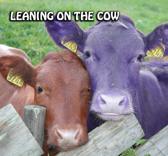 "Why I believe in ""The Purple Cow"": Part 2"