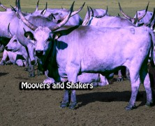 """Why I Believe in """"The Purple Cow"""": Part 3"""
