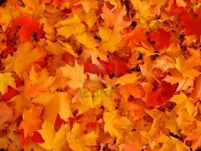 535849-autumn-leaves