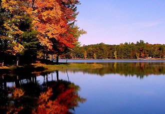In Blackwater Woods