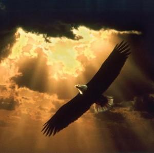soaring_eagle_golden-sky