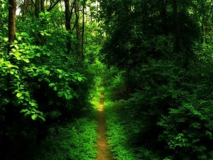 straight-path1