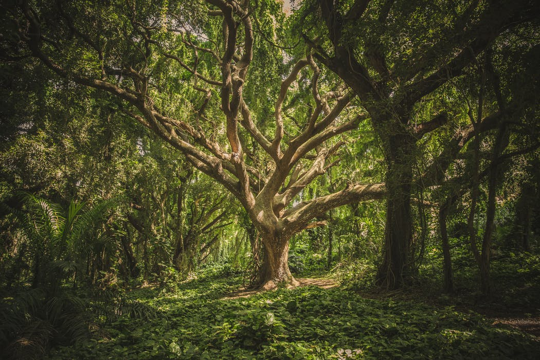 The Fig Tree: Our call to bear light to the world.